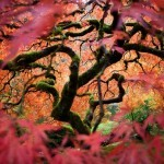 National-Geographic-traveler-photo-contest2012-04-Looking-into-Another-World-Fred-An-Portland-OR