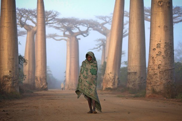 National-Geographic-traveler-photo-contest2012-05-Ken-Thorne-Lost-in-Time-Ancient-Forest-Baobab-Morandava-Madagascar