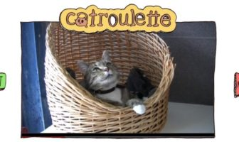 catroulette.be, site de casting d'adoption de chats pour l'association belge Gaia
