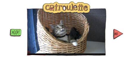 catroulette.be, site de casting d'adoption de chats pour l'association belge Gaia