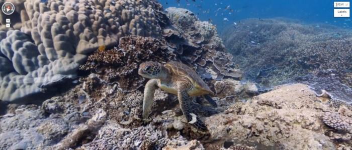 tortue de mer qui nage parmi un banc de poissons à Heron Island sur la Grande barrière de corail en Australie