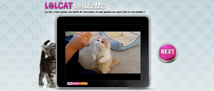 LOLCATroulette, le site chatroulette pour les chats. Vidéos de lolcat humour.