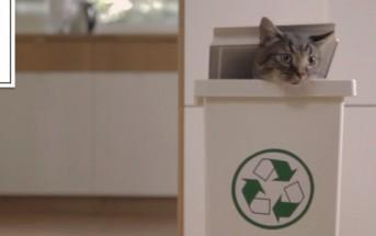Norman, chat militant écologiste pour des produits de la mer durables [WWF]