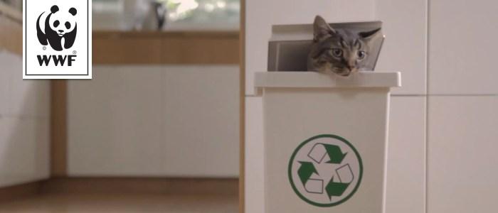 Norman, le chat militant écologiste pour des produits de la mer durables [WWF]