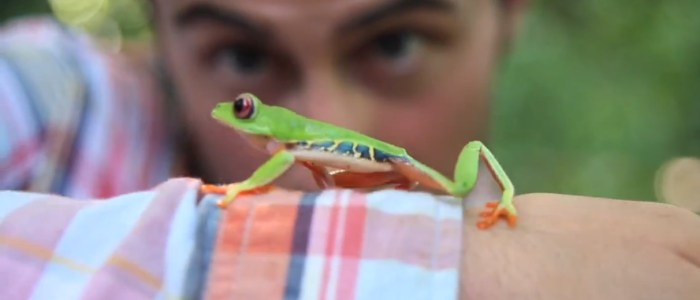Publicité Rainforest Alliance – Just Follow the Frog