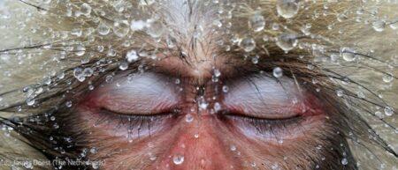 Concours photo Veolia Environnement Wildlife Photographer of the Year 2012