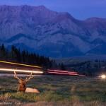 Un cerf de nuit au bord d'une route lumineuse. Vladimir Medvedev : Life in the border zone.