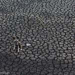 Un chien sauvage au milieu d'un désert aride. Kim Wolhuter : Dog days.