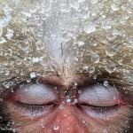 Gros plan sur le visage d'un singe qui ferme les yeux. Jasper Doest : Relaxation.