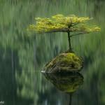 Arbre sur un rocher, reflet dans l'eau. Adam Gibbs : Fairy Lake fir.