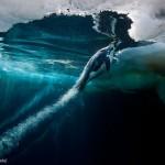Manchot remonte à la surface. Paul Nicklen : Blast off.