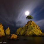 Arbre en haut d'un rocher au clair de lune. Miquel Angel Artus Illana : The cove by moonlight.