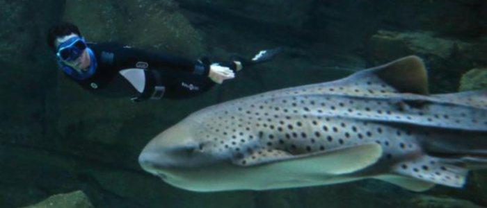 pierre frolla plonge en apnée avec 25 requins à l'aquarium de paris le 11 novembre 2012