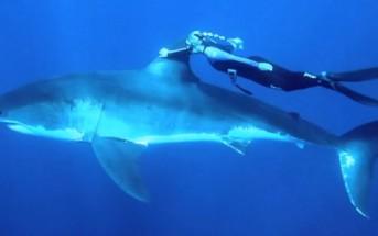 Une blonde nage en apnée avec un grand requin blanc [GoPro]