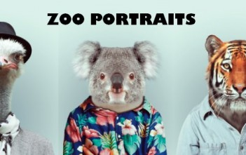 Zoo Portraits : photos d'animaux fashion habillés comme des humains. Autruche avec un foulard et un chapeau melon, Koala en chemise à fleur et tigre avec chemise en jean.