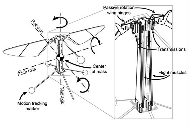 Shema descriptif du fonctionnement du robot insecte volant. Mouche drone miniature.