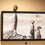 desk-safari-21-suricates