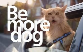 Un chat qui se comporte comme un chien [Pub O2 Be more dog]