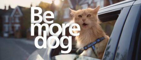 Pub O2 : be more dog. Un chat qui se comporte comme un chien.