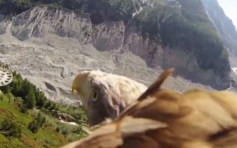 Magnifique vidéo d'une caméra GoPro placée sur le dos d'un aigle