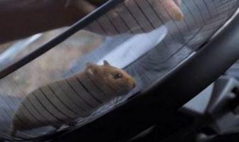hamster-conduit-camion-volvo