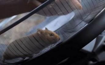 Insolite : un hamster conduit un camion Volvo [pub virale]
