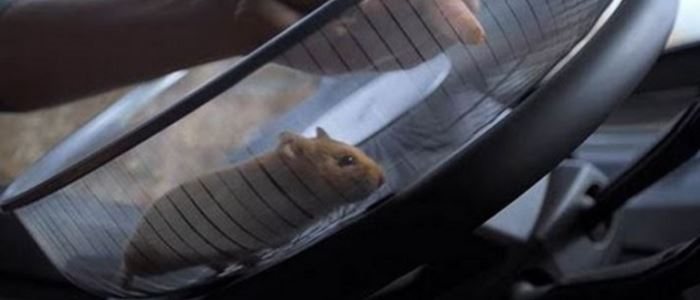 hamster-conduit-camion-volvo