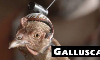 Pub LG G2 : poule avec une caméra Galluscam !