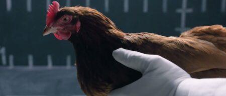 Jaguar-Vs-Chicken-parodie-mercedes