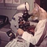 Lolcat : chat-geek-scientifique-03