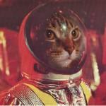 Lolcat : chat-geek-scientifique-06