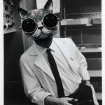 Lolcat : chat-geek-scientifique-07