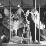 Lolcat : chat-geek-scientifique-08
