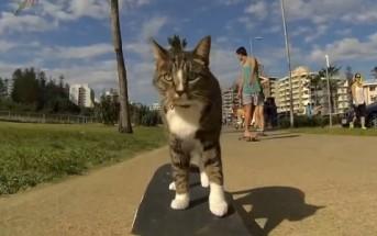 Didga, le chat australien qui fait du skateboard ! [LolCat]