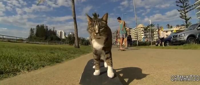 Un chat qui  fait du skateboard - planche à roulette