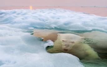 Les photos gagnantes du concours National Geographic 2013