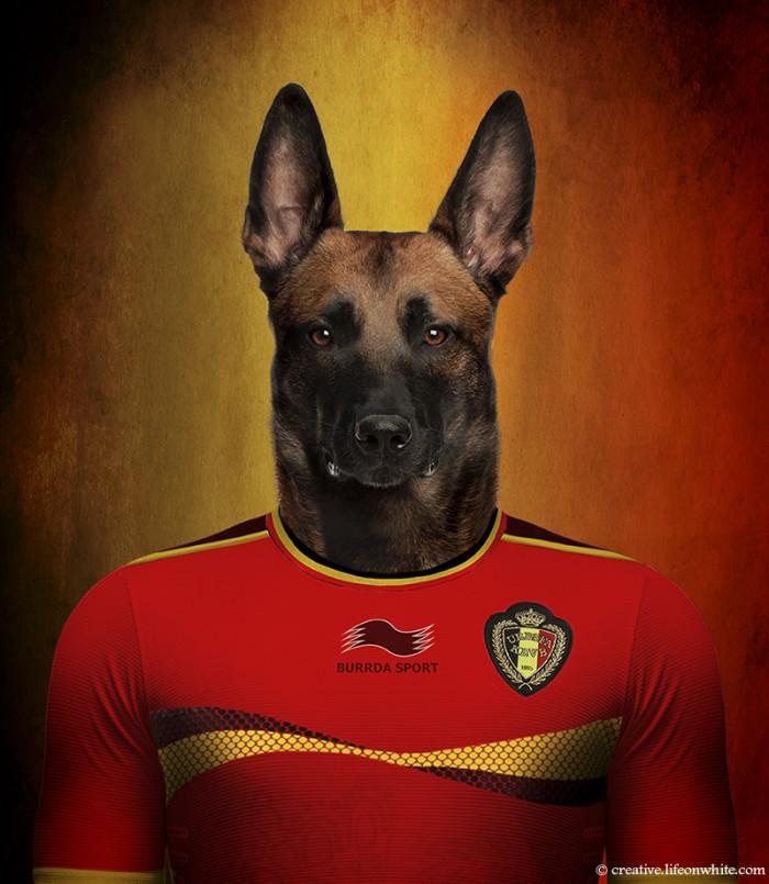 chien en maillot de foot cm2014 : Belgique Berger Belge