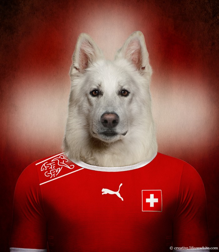 chien en maillot de foot cm2014 : Berger Blanc Suisse