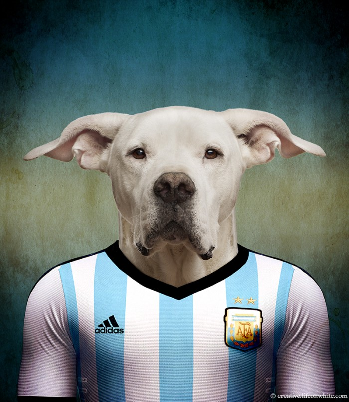 chien en maillot de foot cm2014 : argentine Dogo Argentino