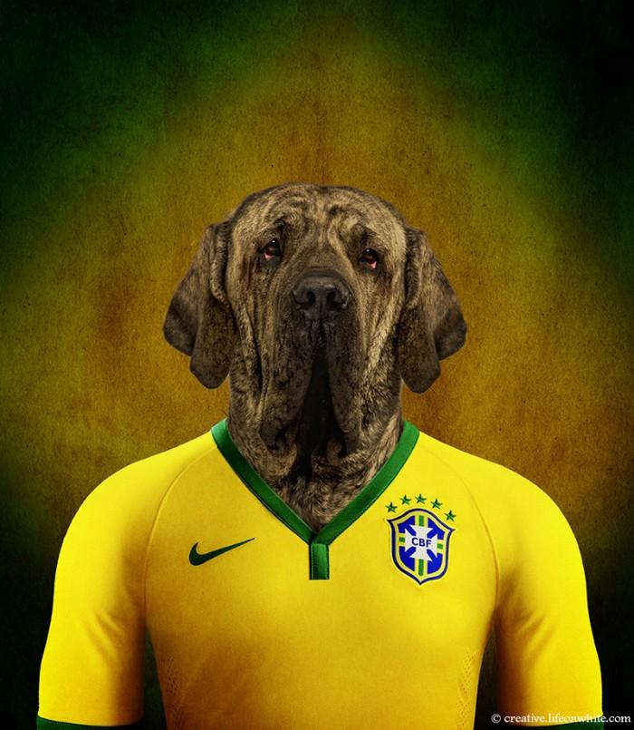 chien en maillot de foot cm2014 : bresil mastiff bresilien