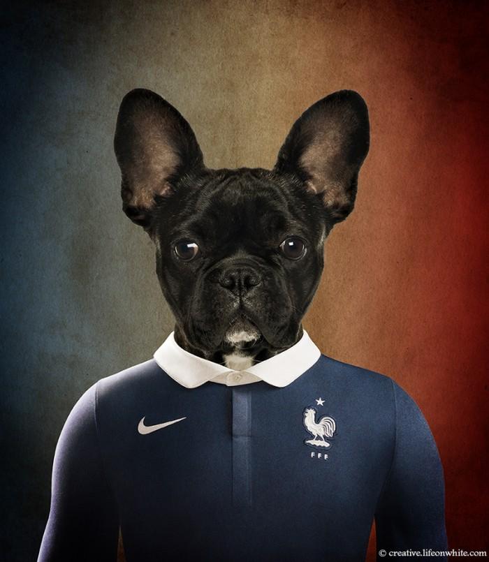 chien en maillot de foot cm2014 : France bulldog français