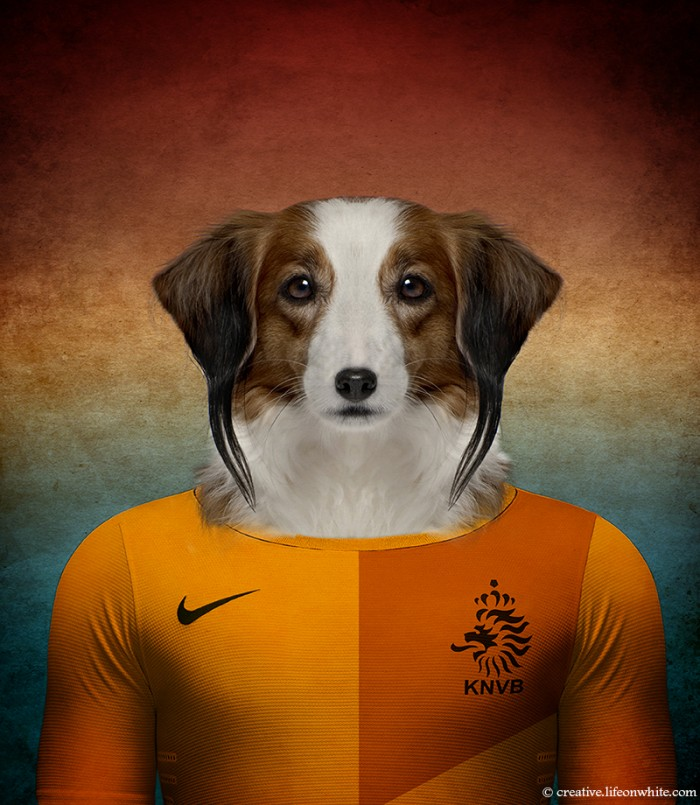 chien en maillot de foot cm2014 : Hollande Kooikerhondje