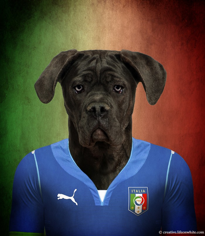 chien en maillot de foot cm2014 : italie Cane Corso