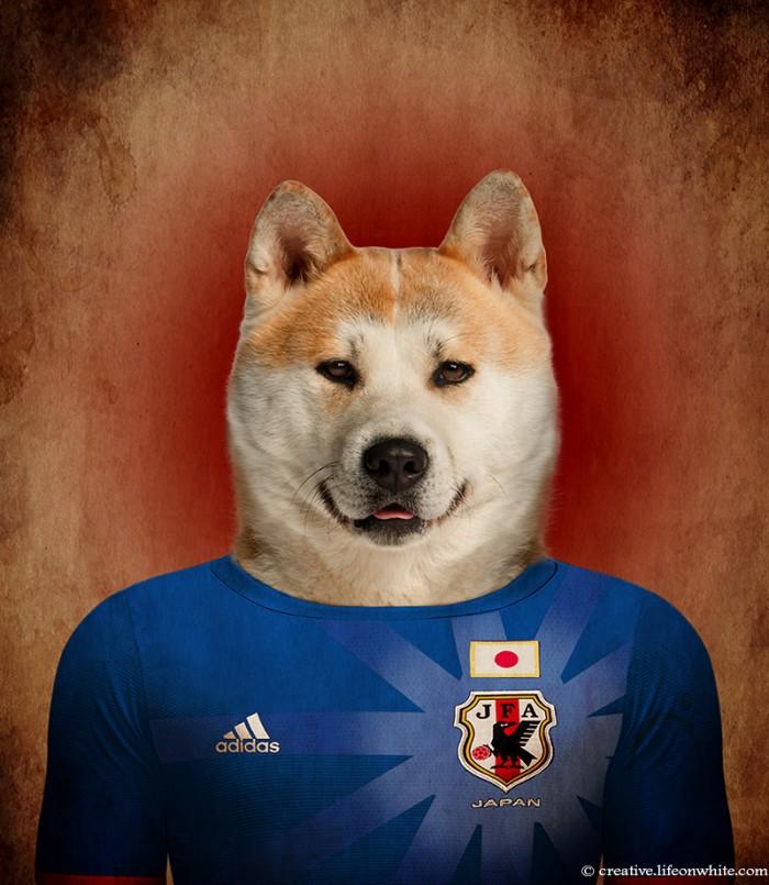 chien en maillot de foot cm2014 : japon Akita Inu
