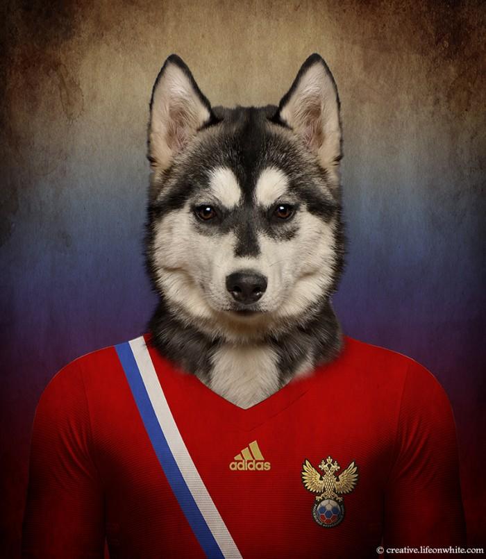 chien en maillot de foot cm2014 : Russie Siberian Husky