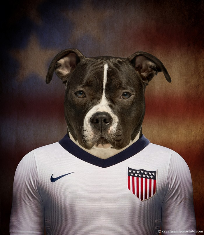 chien en maillot de foot cm2014 : usa American Staffordshire-Terrier