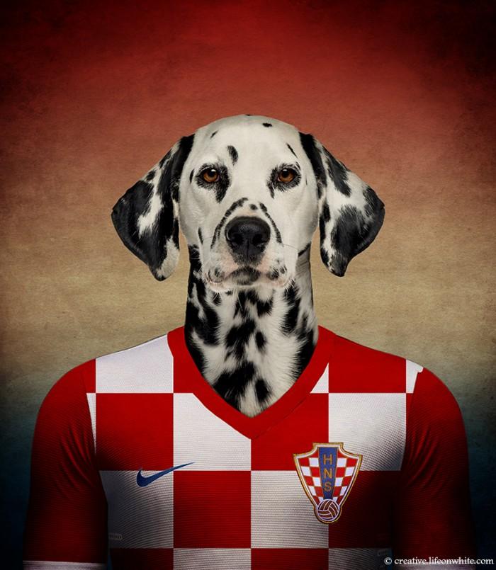 chien en maillot de foot cm2014 : Croatie dalmacien