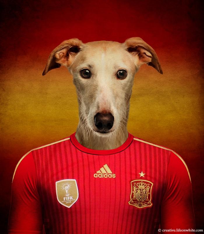 chien en maillot de foot cm2014 : Espagne Galgo espagnol