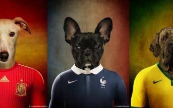 Des chiens en maillot de football pour la coupe du monde 2014