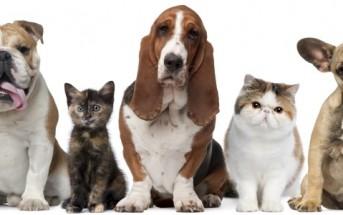 Comment réagissent chiens et chats face à un tour de magie ?